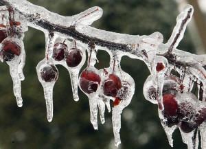 gotas de nieve
